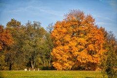 Bench in the park on a background of huge autumn Royalty Free Stock Photography