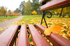 Bench in the park Stock Photos