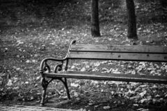 Bench in the park in black and white.