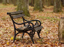 A bench in the park. A black wooden bench in the park covered with some yellow leaves stock photos