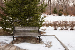 Bench in the park covered with snow. Royalty Free Stock Image