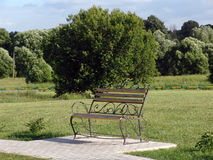 Bench in park. The bench established in park for rest royalty free stock photography
