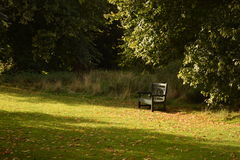 Bench in park in Fall with leaves Stock Photo