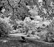 Bench in park in infrared black and white Royalty Free Stock Photo