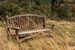Bench in the park. Bench in the Killarney National Park,Ireland Royalty Free Stock Photos