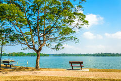 Bench at the park. This photo taken during the dry season in Upper Seletar reservoir Royalty Free Stock Photography