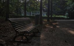 A bench in the park. Public park in Arnhem, Netherlands Stock Images