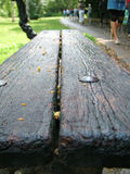 Bench in park. After rain Royalty Free Stock Image