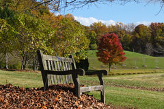 Bench in Park Setting Virginia Autumn Suburbs stock photos