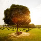 Bench in the park at sunset. Bench in the park at sunset Royalty Free Stock Photos