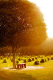 Bench in the park at sunset. India Stock Image