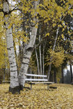 Bench in park under trees. Stock Photography