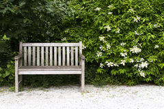 Bench in the park. Wooden bench in the park stock photo