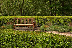 Bench in the Park. A wooden park bench surrounded by tree, bushes and various greenery Stock Image