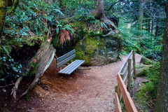 Bench on Path, Snoqualmie Forest. A bench to rest while hiking the rugged trail in the Mt. Baker-Snoqualmie National Forest Stock Photography