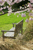 Bench of peace Stock Images