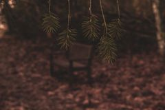 Bench of Peace through the Pine Leaves royalty free stock images