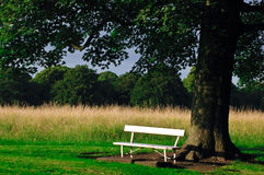 Bench in a Phoenix Park Royalty Free Stock Photos