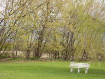 A bench. Photo taken in my yard near the trees that start to green. It`s spring royalty free stock photos