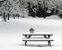 Bench and Pigeon Royalty Free Stock Photos
