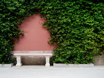 Bench on pink old wall, overgrown ivy Royalty Free Stock Photos