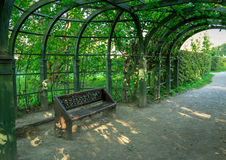 Bench placed under the arc of trees in the park.  Royalty Free Stock Image
