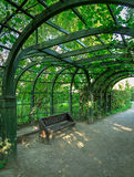 Bench placed under the arc of trees in the park.  Stock Images