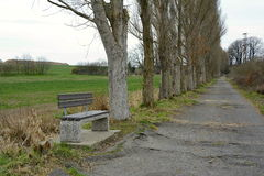 Bench in the Poplar Tree Alley, Czech Republic, Europe Royalty Free Stock Images