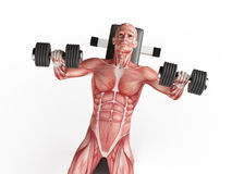 Bench press Royalty Free Stock Photos