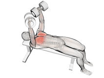 Bench press workout. 3d rendered illustration of a bench press workout Stock Image
