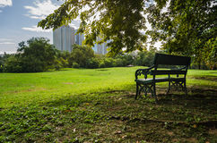 Bench in public park with shadow of green tree and lawn Royalty Free Stock Images