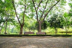 Bench in Queen Sirikit Park. Bench in the Queen Sirikit Park, Bangkok Stock Image