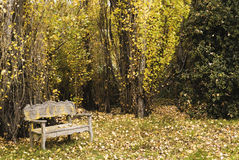 Bench in a quiet woodland in autumn Royalty Free Stock Image