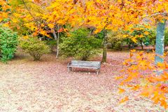Bench with Red maple leaves blooming at Arashiyama. Kyoto, Japan Royalty Free Stock Photography