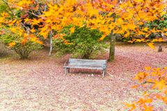 Bench with Red maple leaves blooming at Arashiyama. Kyoto, Japan Royalty Free Stock Photos