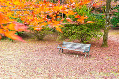 Bench with Red maple leaves blooming at Arashiyama Stock Photo