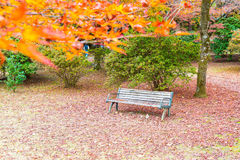 Bench with Red maple leaves blooming at Arashiyama Stock Photos
