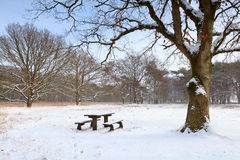 Bench at rest place on snow in winter. Drenthe, Netherlands Royalty Free Stock Image
