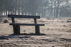 Bench in richmond park. Early January Royalty Free Stock Image