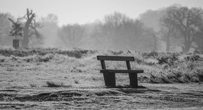 Bench in richmond park. Early January Royalty Free Stock Images