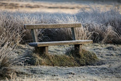 Bench in richmond park. Early January Royalty Free Stock Photo