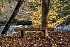 Bench on the river bank and colored maple leaves. Yellow autumn, natural environment background. Bench on the river bank and colored maple leaves. Yellow autumn royalty free stock image