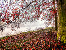 Bench on river path. A cool winters day along the river Trent in derbyshire uk stock photography