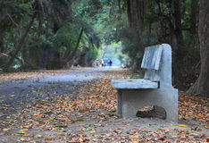 Bench beside the Road. A cemented bench beside the road. Autumn dry leaves Royalty Free Stock Images