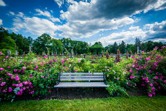 Bench and rose gardens at Elizabeth Park, in Hartford, Connectic stock photo