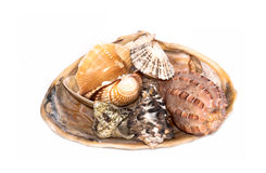 Bench of sea shells. Isolated on white Royalty Free Stock Images