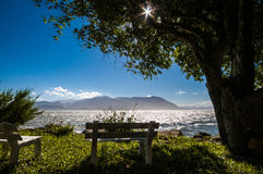 Bench by the sea. A white bench on a green grass by the sea and under a tree. In Florianopolis, Santa Catarina State, Brazil Stock Image