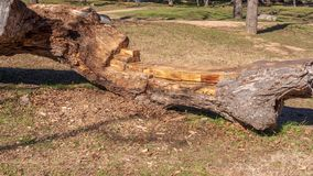 Bench seat in a park carved from large fallen tree trunk royalty free stock photo