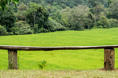 Bench seat in rice field Royalty Free Stock Photo