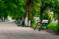 Bench in the shade of chestnut alley. Lovely urban scenery in summer Stock Photography